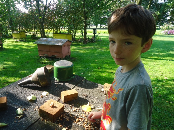 Lachlan cracking fresh hazelnuts by the beehives in Dratów.