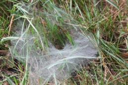 funnel spider net